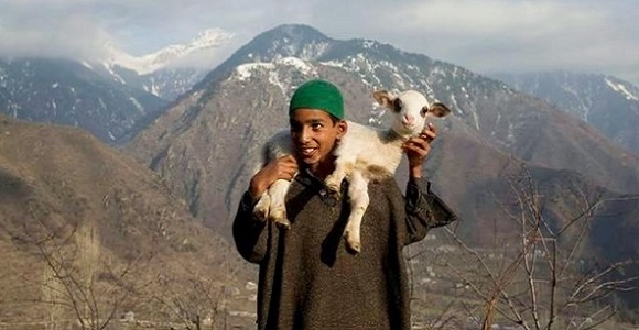 Ahmed with a lamb